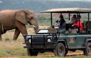Gamedrive auto en olifant Zuidelijk Afrika