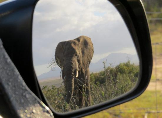 Grandioos Afrika-41