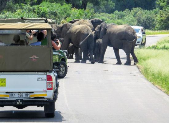 Olifanten op de weg Afrika